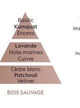 bois-sauvage-piramide-olfativa-lampeberger