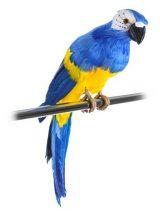 figura-loro-plumas-azul