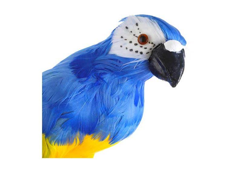 figura-loro-plumas-azul-detalle