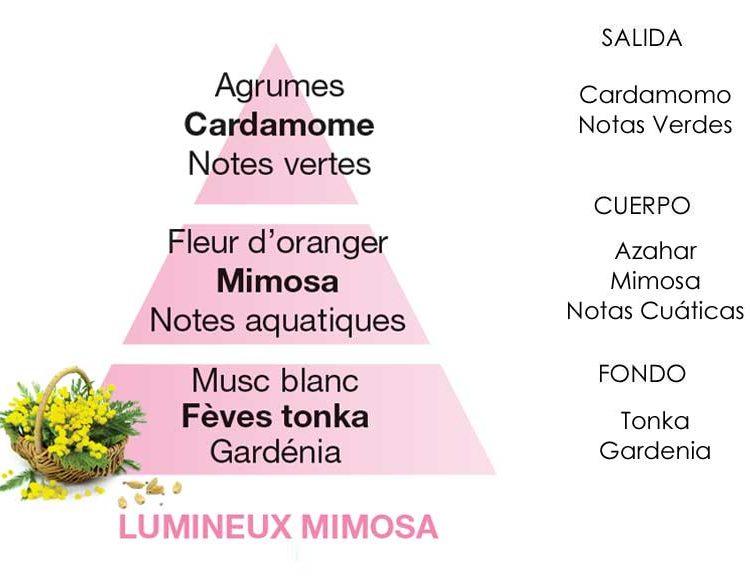 lumineux-mimosa-piramide-olfativa